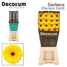 GE GR Olympic Gold DiaDecorum