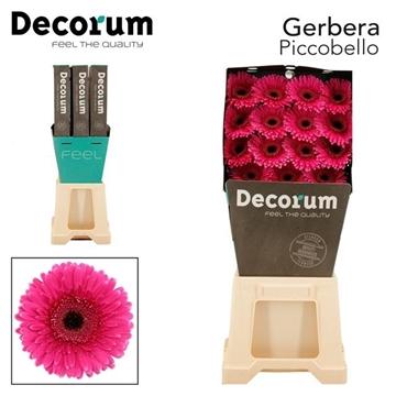 GE GR Picobello DiaDecorum