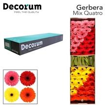 GE GR Mix Quatro Decorum