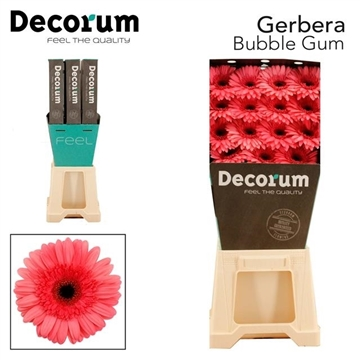 GE GR Bubble gum DiaDecorum