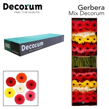 Ge GR Mix Decorum
