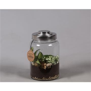 Terrarium met rvs deksel met gaatjes, Groen plant