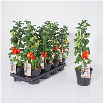 Farmzy® Little Red Tree tomatenplant