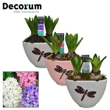 Hyacint Libelle HL15353 [LOVELY COLORS]