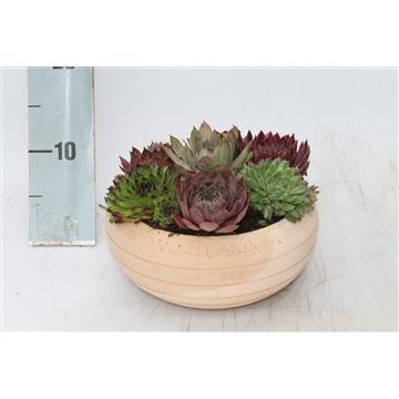 Terracotta pot rond