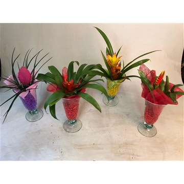 Bromelia in Ijscoupe