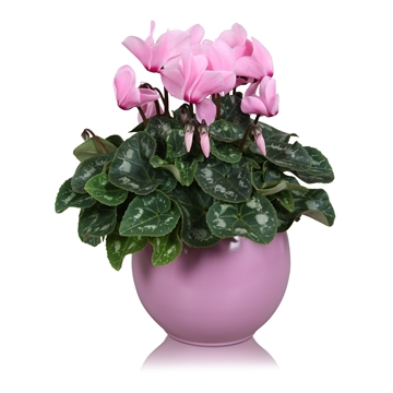 "Cyclamen in roze ""Lisa"" keramiek"