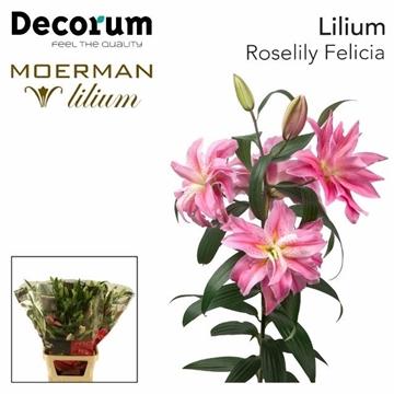 Roselily  FELICIA Decorum