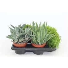 Artikel #378239 (The Joy mix 4: The Joy mix, 4 soorten groene planten)