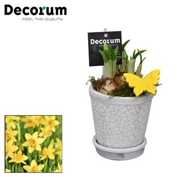 Narcis Crackle Pot Mini HL18333N