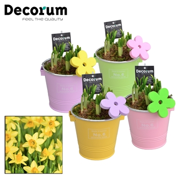 Narcis Colourful Bucket GM HL16587