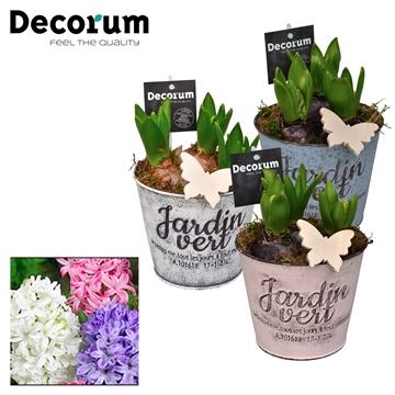 Hyacint Jardin HL19673 [LOVELY COLORS]