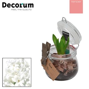 Hyacint Candy HL19044WP [TENDER]