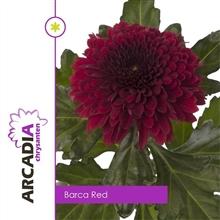 Artikel #434872 (21710-32324: CHR G BARCA RED Arcadia)