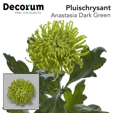 CHR G ANAST DARK GREEN Decorum