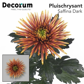 CHR G SAFFINA DARK P100Decorum
