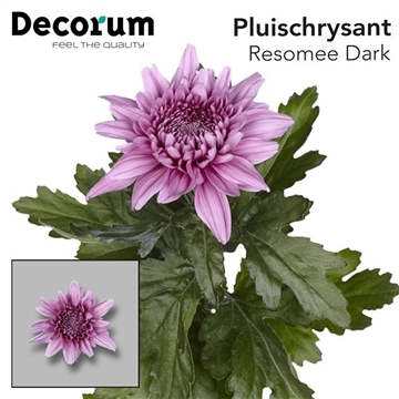 CHR G RESOMEE DARK P100Decorum