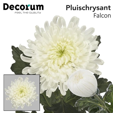 CHR G FALCON Decorum