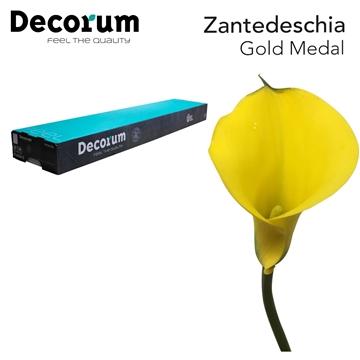 Zantedeschia Gold Medal