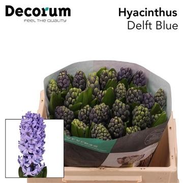 HYAC DELFT BLUE