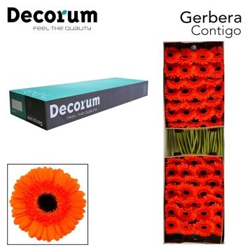 GE GR Contigo Decorum