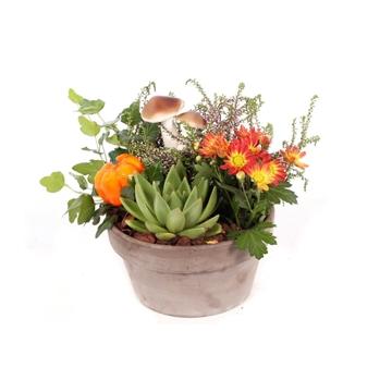 Herfst arrangement opgemaakte bruine schaal met 4 planten en herfst bijstekers