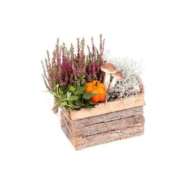 Herfst arrangement opgemaakte vierkante houtenbak 3 planten en herfst bijstekers