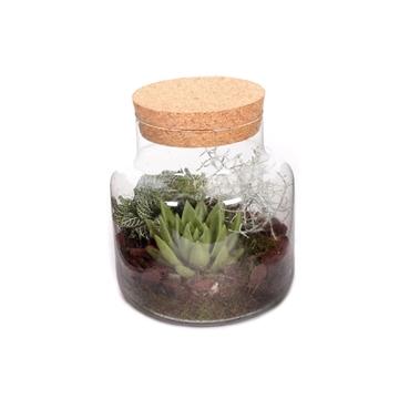 Herfst arrangement opgemaakte glazen melkbus 3 planten( terranium met kurk)