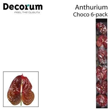 Anth A Choco