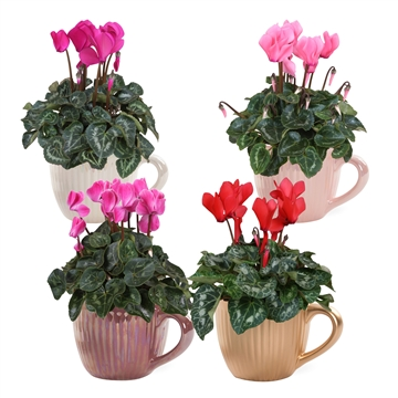Collectie 'Moments' - Cyclamen in keramiek Nickie