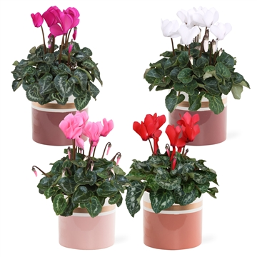 Collectie 'Moments' - Cyclamen in keramiek Joy
