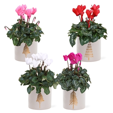 Collectie 'Moments' - Cyclamen in keramiek Manon