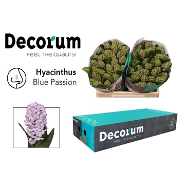 HYAC BLUE PASSION