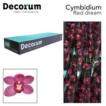 CYMB T Red Dream Decorum
