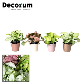 Collectie Moments - Syngonium mix in pot Coco (Decorum)