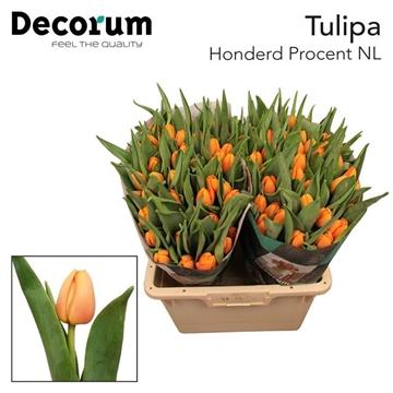 TU EN HONDERD PCT NL