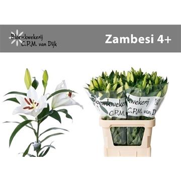 Li OT Zambesi 4+