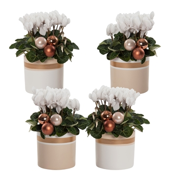 Collectie 'Winter Bliss' - Cyclamen wit in keramiek Joy met kerstballen (Kerst)