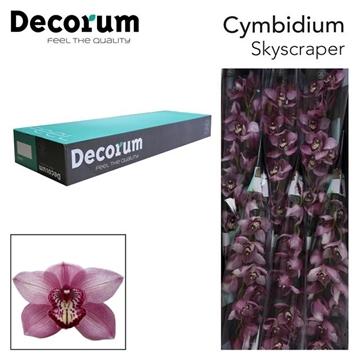 CYMB T skyscraper Decorum