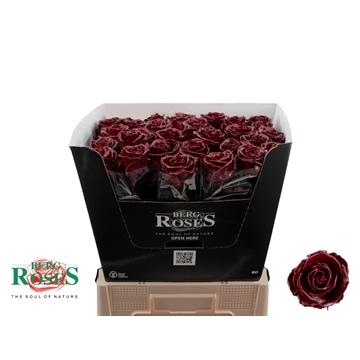 Rosa WAX Bordeaux 200