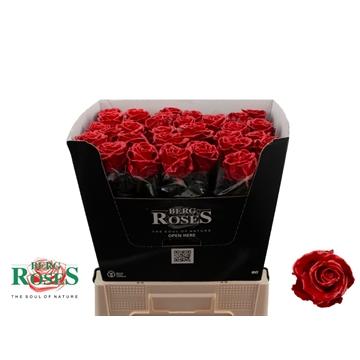 Rosa WAX Rood 510