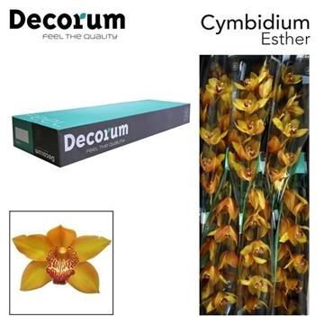 CYMB T Esther Decorum