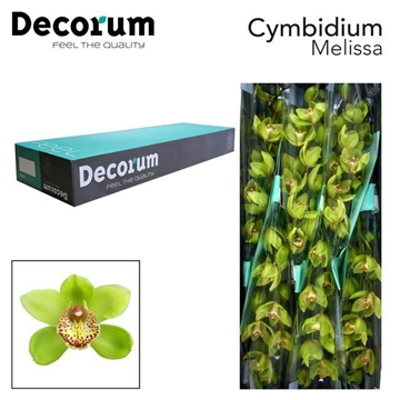 CYMB T Melissa Decorum