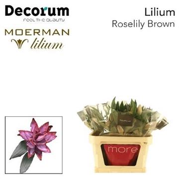LI ROSELILY DEJIMA 2+ brown