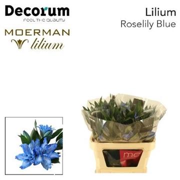 LI ROSELILY DEJIMA 2+ blue