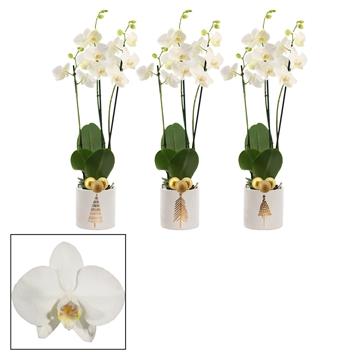 Phalaenopsis 3 tak wit in Manon met kerstballen (Moments)