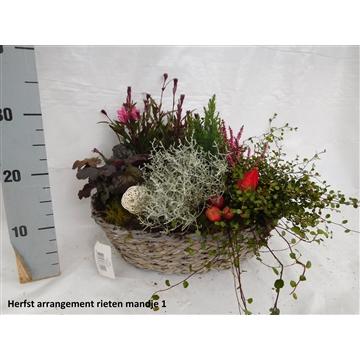 Herfst arrangement rieten mandje