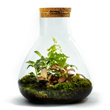 Erlenmeyer Ecosystem Large - Botanic MIx