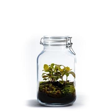 Ecosystem Medium Jar - Fittonia Color MIx