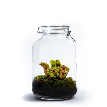 Ecosystem Large - Sarracenia